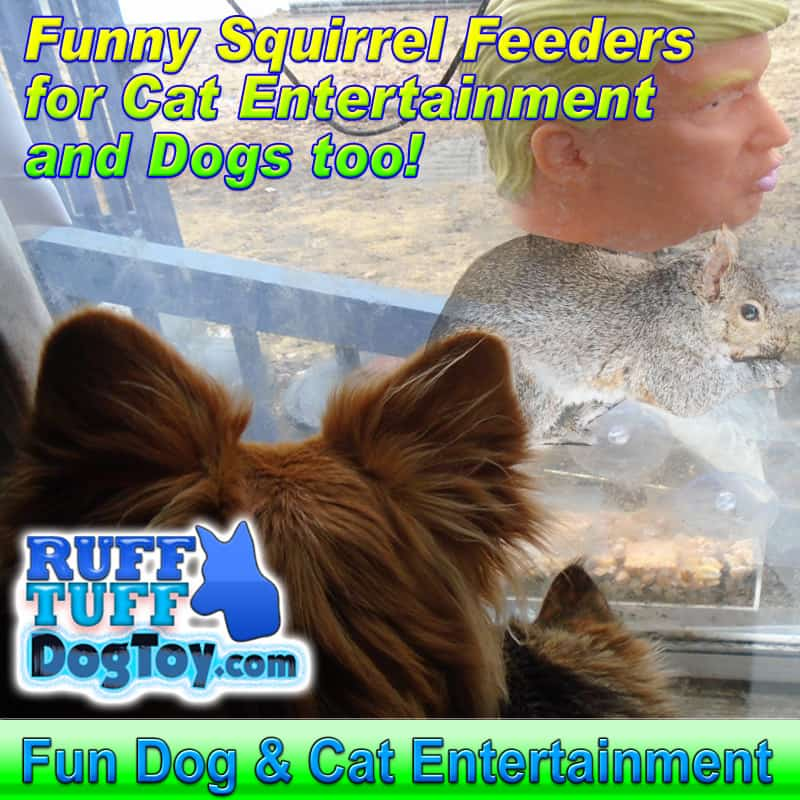 funny squirrel feeders for cat and dog entertainment