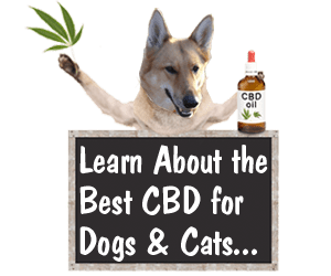 Learn About High Quality Pet CBD Including Some New Dog and Cat CBD Options
